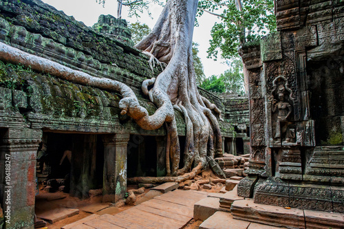 Plakat Ta Prohm - świątynia z drzewem i korzeniami - Angkor Wat - Kambodża