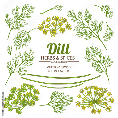 Fotografía dill plant elements vector set