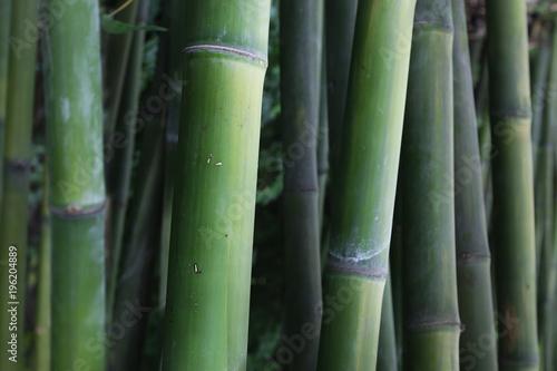 In de dag Bamboo bamboo stick