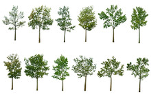 Collection Tree Isolated On Wh...