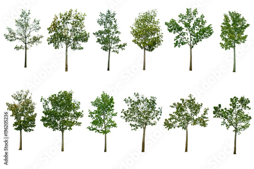 Foto  Collection Tree isolated on white background