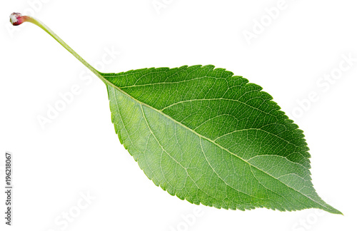 Green apple leaf isolated on white background