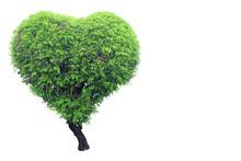 Heart Shaped Tree Isolated On ...