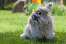 Decorative Gray Rabbit Sitting On The Grass