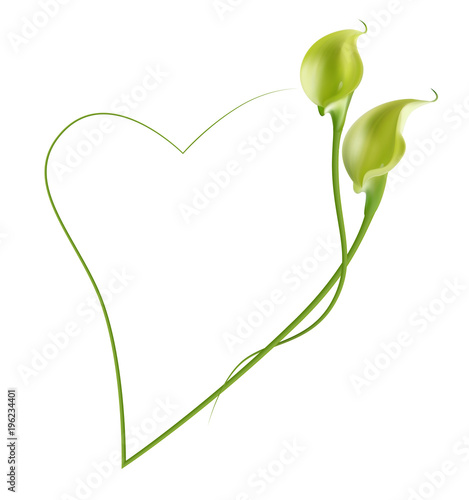 Realistic green-yellow calla lily frame, heart. - Buy this stock ...