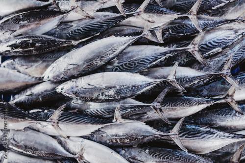 Sri Lankan Fish Market