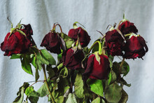 Bouquet Of Withered Red Roses