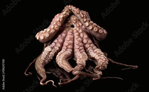 Stampa su Tela Krake Octopus Tentacle Seafood