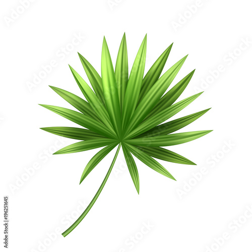 Vector 3d tropical palm leaf exotic vacation Wall mural