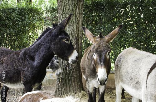 Deurstickers Ezel Donkey in stable
