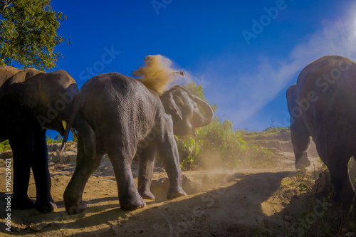 Printed kitchen splashbacks South Africa Outdoor view of young elephants walking near the riverbank in the nature, in Elephant jungle Sanctuary, during a gorgeous sunny day with a blue sky in Chiang Thailand