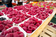 Rows Of Full Pints Of Red Raspberries At A Farmers Market Or Outdoor Produce Store. Organic Fruit With Antioxidants.