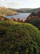 Green Bushes On Malta Island I...
