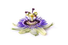 Passiflora Passionflower Isola...