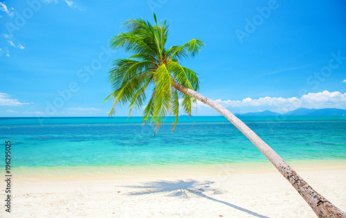 Poster Tropical beach tropical beach with coconut palm