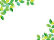 新緑 水彩イラスト