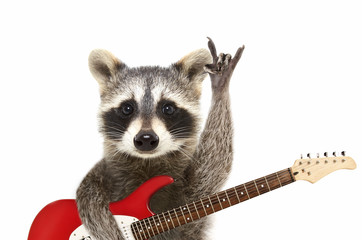 Portrait of a funny raccoon with electric guitar, showing a rock gesture, isolated on white background