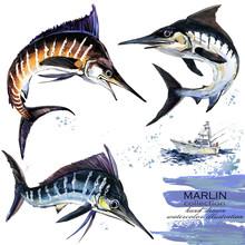 Marlin Hand Drawn Watercolor Illustration.