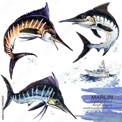 Photo  Marlin hand drawn watercolor illustration.
