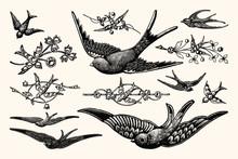 Vintage Bird Vector Line Art - Early 1800s Decorative Illustrations