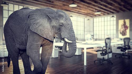 Foto op Aluminium Olifant elephant in the room