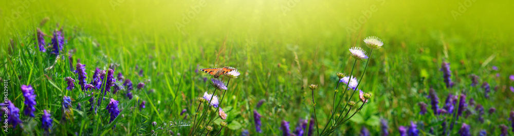 Macro shot on butterfly and wild flowers.