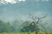 Eurasian Kestrel Is Perching O...