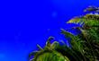 canvas print picture - oiseau et palmiers