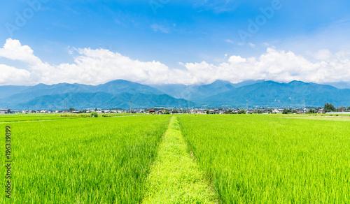 Foto op Aluminium Lime groen 夏の信州 安曇野の田園風景