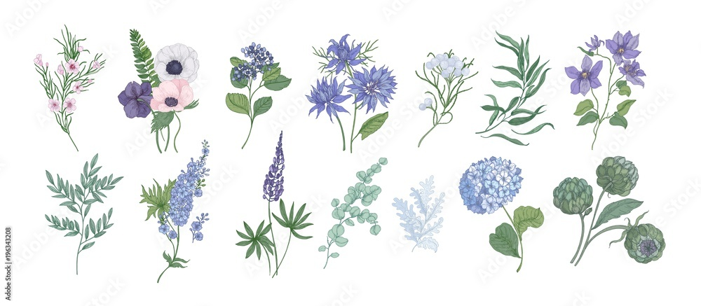 Fototapety, obrazy: Bundle of detailed drawings of beautiful floristic flowers and decorative herbs isolated on white background. Set of beautiful floral and herbal decorations. Botanical hand drawn vector illustration.