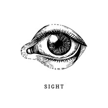 Hand Drawn Icon Of Human Sight...