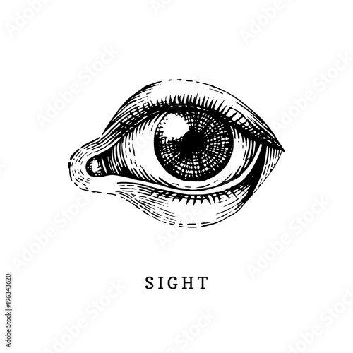 Hand drawn icon of human Sight sense in engraved style Fototapete