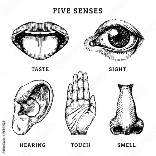 Leinwand Poster  Icons set of five human senses in engraved style