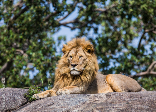 Tuinposter Leeuw Big male lion on a big rock. Serengeti National Park. Tanzania. An excellent illustration.