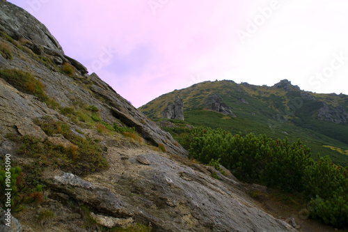 Foto op Canvas Purper Summer landscape with Carpathian Mountains, Europe. High mountain peaks.