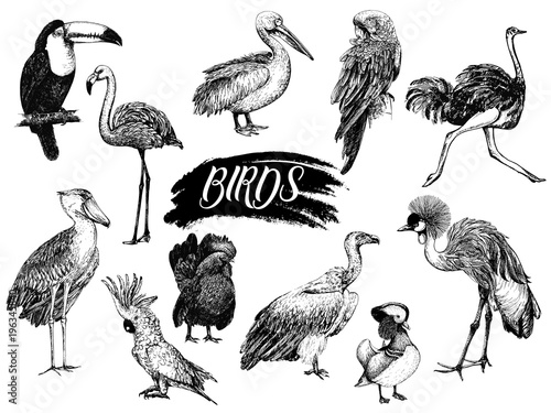 Cuadros en Lienzo Big set of hand drawn sketch style birds isolated on white background