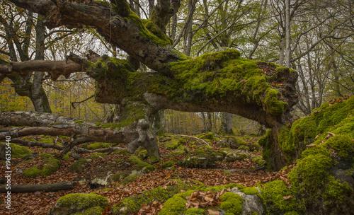 Tuinposter Weg in bos Haya