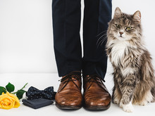 Cute Kitten, Yellow Rose, Bow Tie, Handkerchief And Man's Legs In Stylish Brown Shoes On A White Background. Wedding Preparations