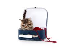 Cute Tabby Kitten In Suitcase