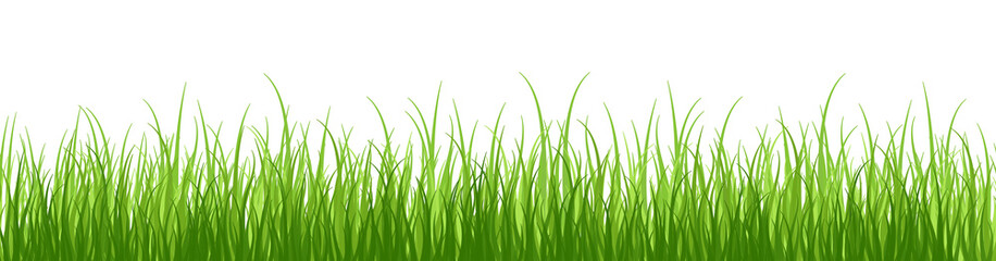 Springtime tender grass, isolated on white background without shadow.Wide grass border.