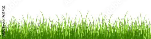 Obraz Springtime tender grass, isolated on white background without shadow.Wide grass border. - fototapety do salonu