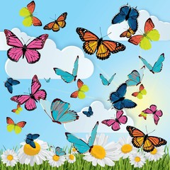 Fototapeta Do przedszkola background with butterflies, daisies, grass