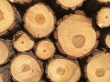 Pine Cord Wood