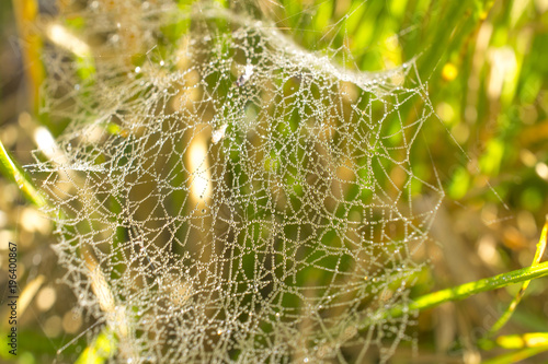 a beautiful arachnoid network strewn with shiny drops of rain or dew - like bead Canvas Print