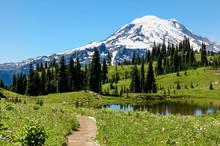 Trail Through Flowering Alpine...