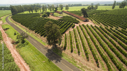 Papiers peints Vignoble Small farm chickens and coffee in the interior of Brazil