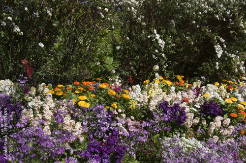 Sydney Australia Garden Bed Of Spring Flowers And May Bush Hedge