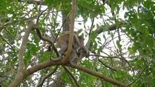 Small Chimpanzees Climb Trees ...