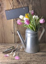 Tulips In A Metal Watering Can...