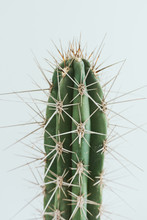 Cactus With White Background
